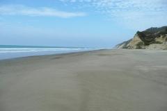 Strand von Llama